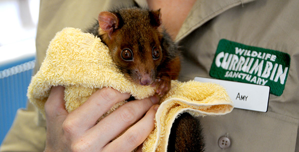 Currumbin_Wildlife_Hospital_Index_Image.jpg